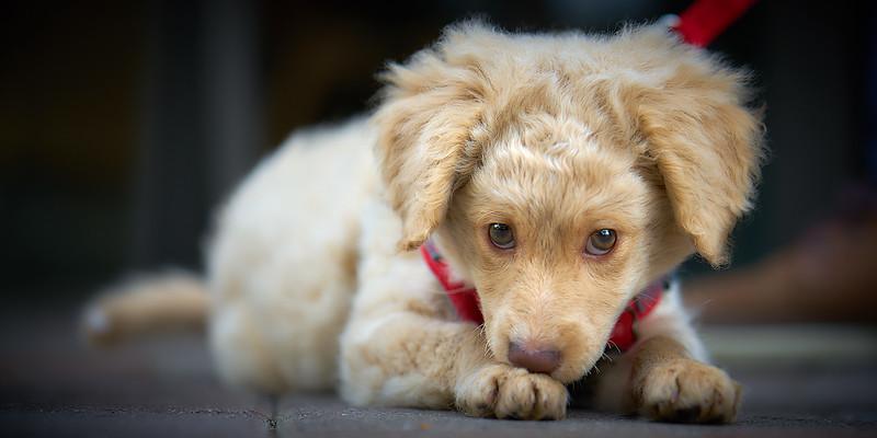 puppymar1317 9.jpg