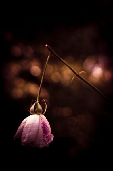 rose fishing_justine king fine art.tif