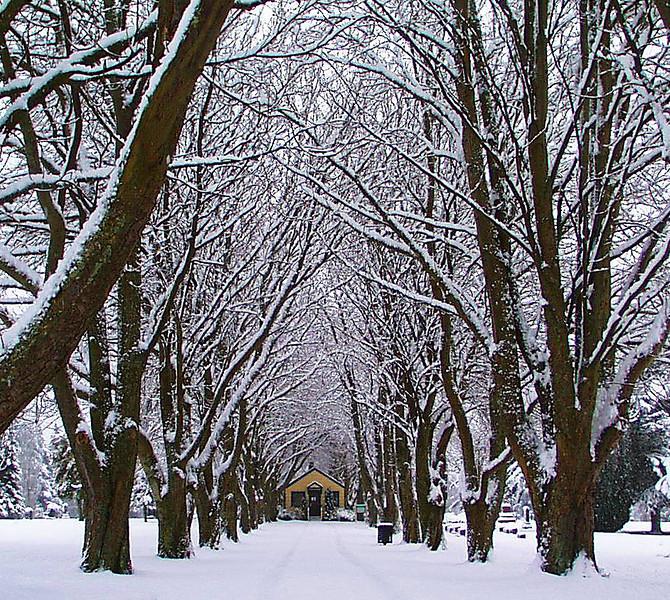 1-30-2002-snow#8.JPG