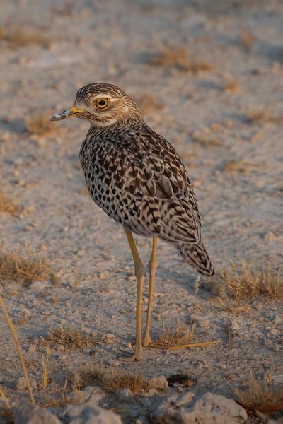 Namibia 69A8862.jpg