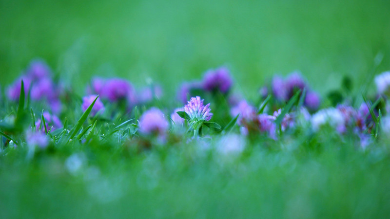 Flowers2 1920x1080 (31).jpg