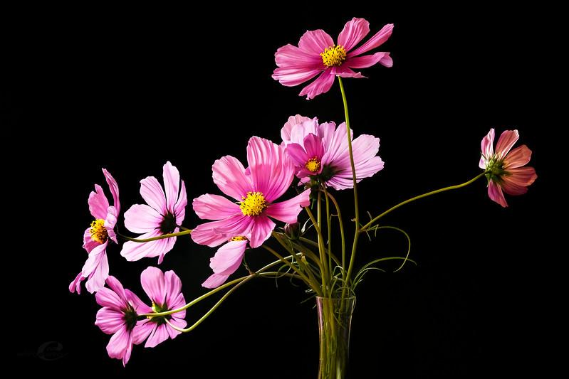 flower2_EAC7588-16x24.jpg