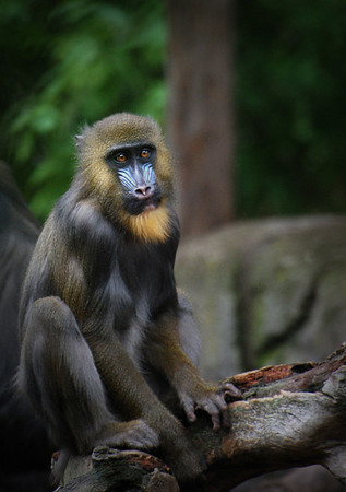 Other Primates