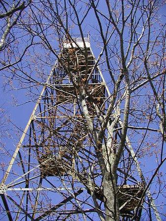 2 Shuckstack-Tower.jpg