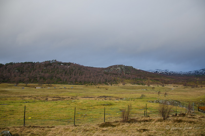 Scotland-Highland-9016.jpg