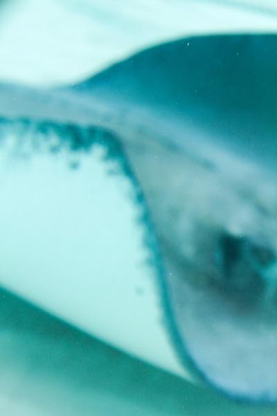 cayman--4.jpg