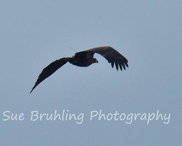 Decorah Eagles 2011
