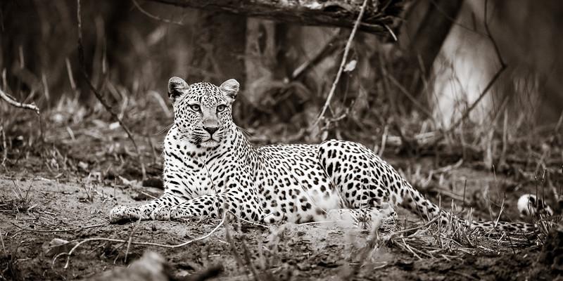 LeopardHills-20191029-2095.jpg