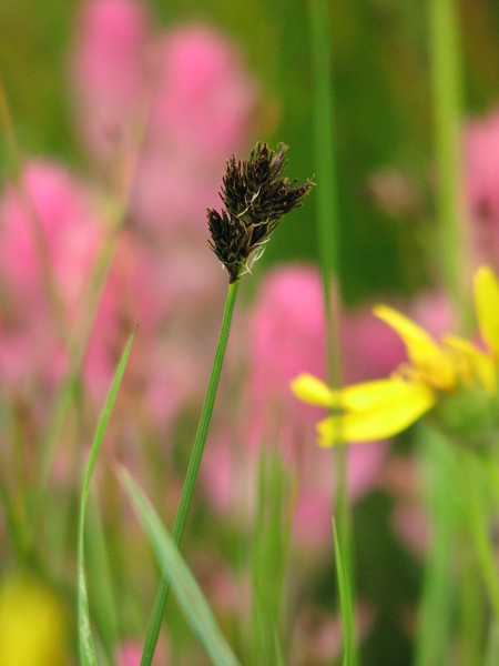 amh FLOWERS (1320).jpg
