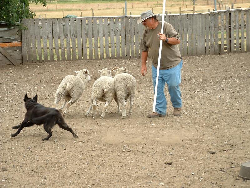 Herding at Ewetopia