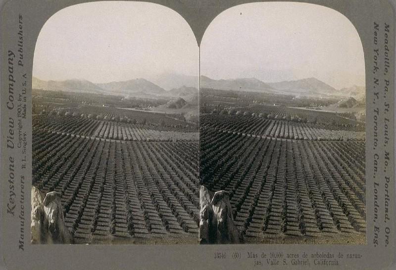 1903-OrangeGroves-SanGabrielValley.jpg