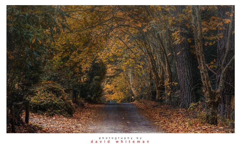 Shipley Autumn