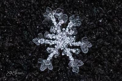 snowflakes-1351.jpg