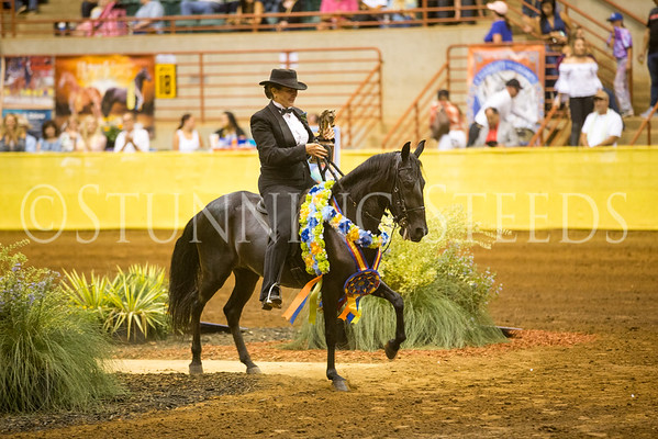 Performance Mare Filly Championship