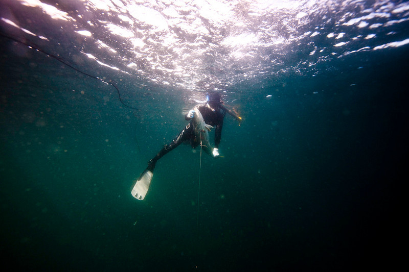 20090420_Underwater_Mexico_0258.jpg