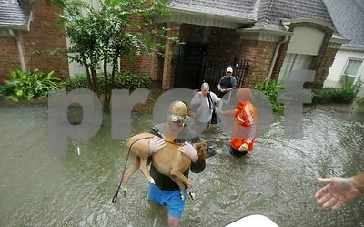 adoptapetcom-launches-foster-a-hurricane-pet-to-provide-emergency-pet-foster-homes-for-families-displaced-by-hurricane-harvey
