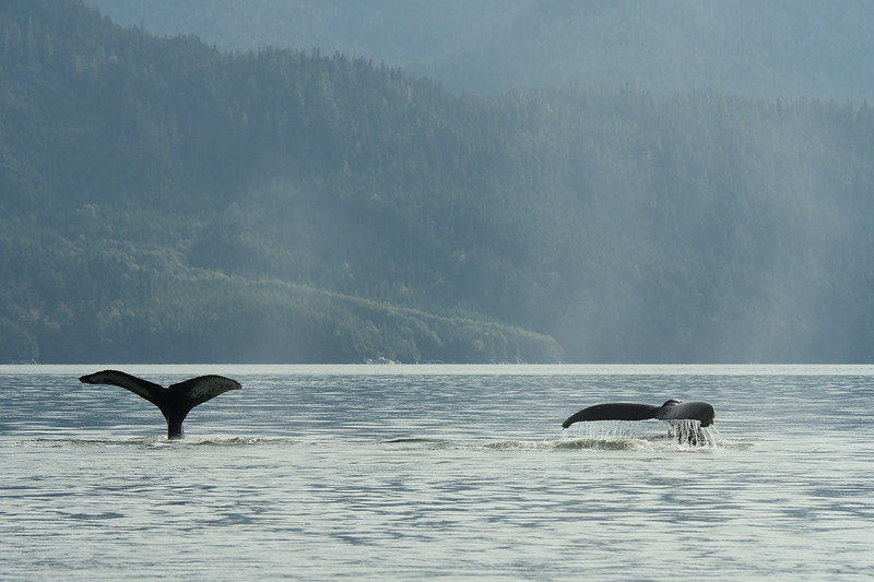 Two whale tail