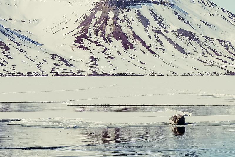 Svalbard-2013-37.jpg