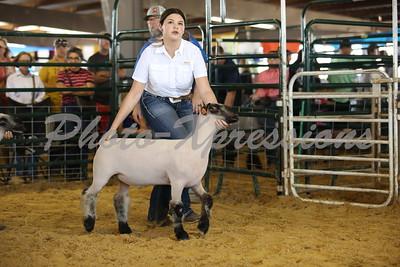 9-26-21 Sunday Lamb Show