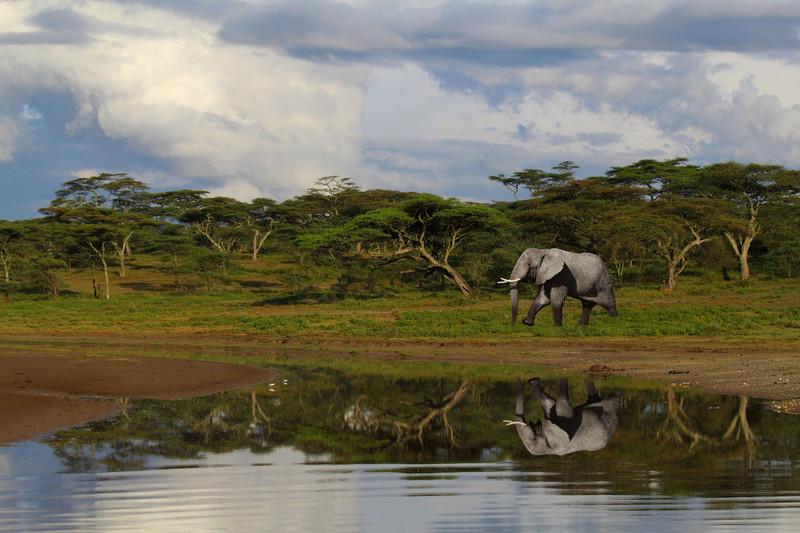 NDUTU - TANZANIA