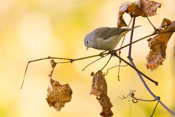 October 21 - Fontenelle Forest