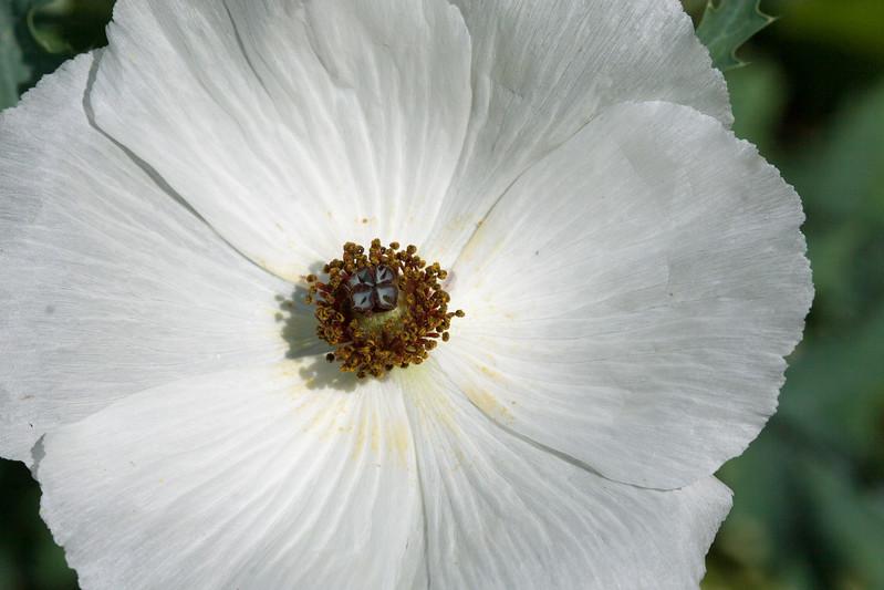 2009 06 30_NY Botanical Gardens_0672.jpg