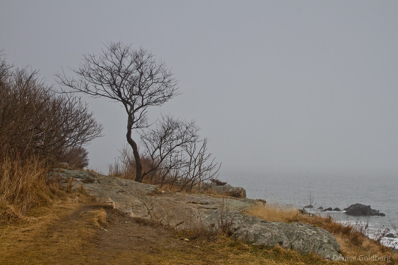 bare branches by the sea