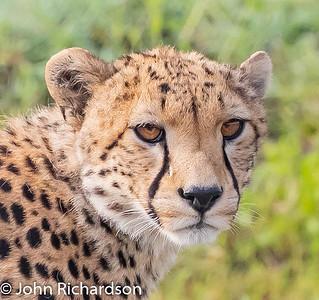 Tanzania Animals 2020