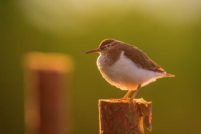 Ptaki - Fotografia przyrodnicza - Paweł Pawlak