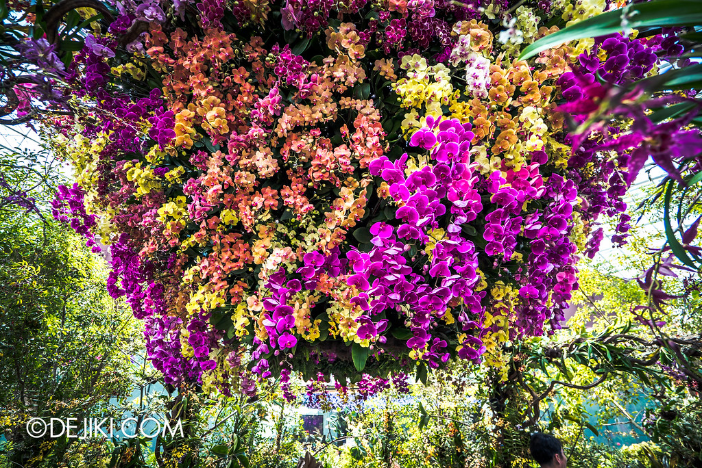 Gardens by the Bay - Orchid Extravaganza 2016 - orchid spiral