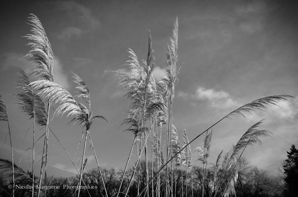 Paysages / Nature, 2014 et Avant