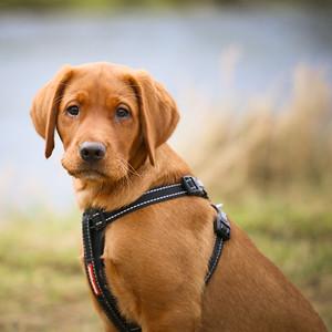 Dog Portrait Shoot - Lauren Bannard