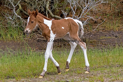 Duckie's Filly