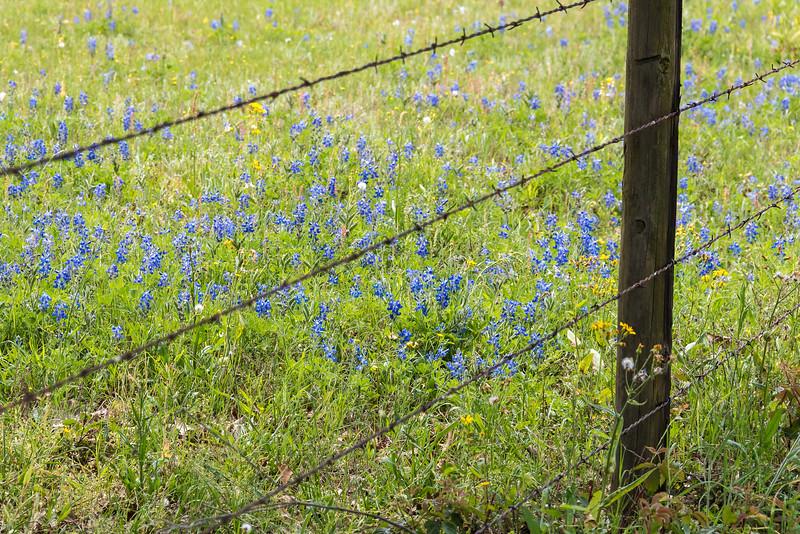 Texas Spring-0650.jpg