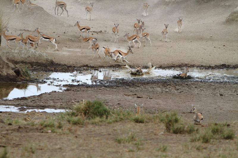 Tommies crossing the Creek.JPG