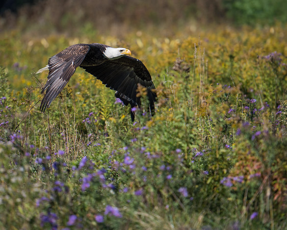Eagles & Hawks