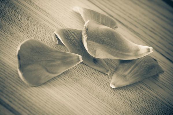 Lístky tulipánu