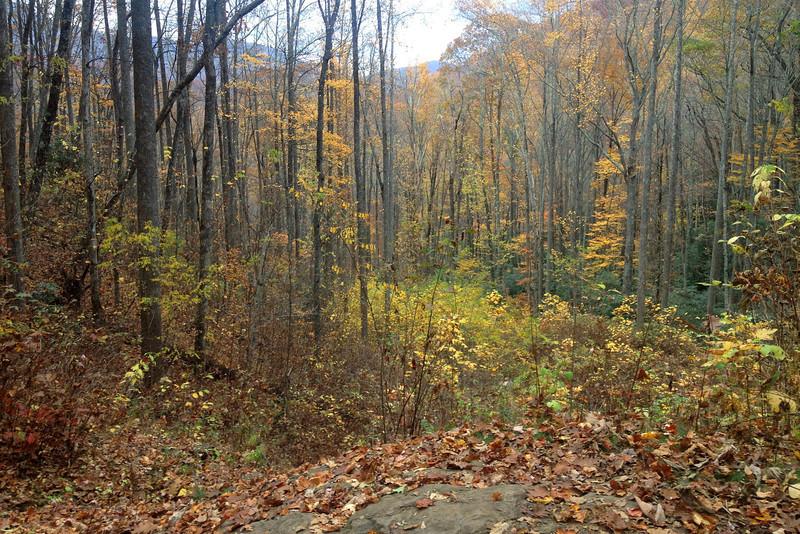 Rufus Morgan Falls Trail