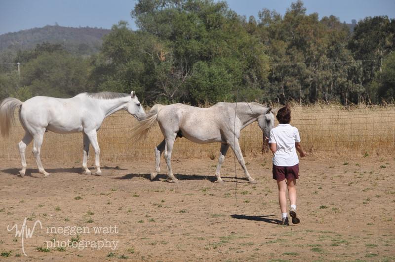EB&Horses-102.jpg