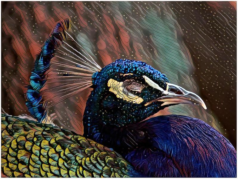 PAVONE-parrot-draw-k1_output.jpg