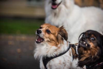 27.09.2017- Zwei Hunde mit Besitzer