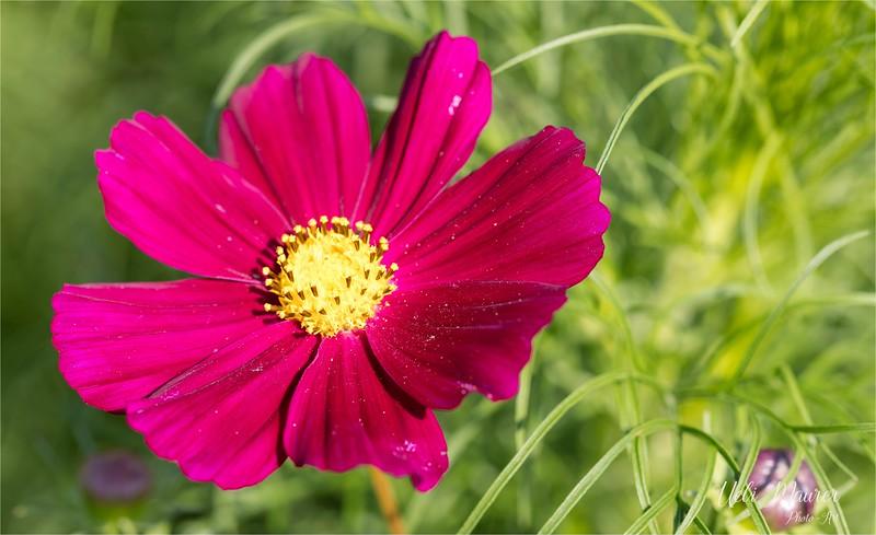 Blumen zum Selberschneiden - 2015-08-13- 0U5A1489.jpg