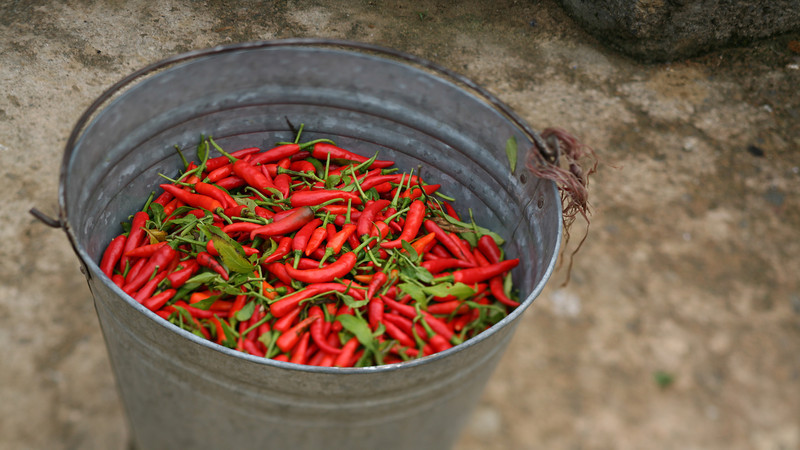 Red Peppers, Yang Shuo, China