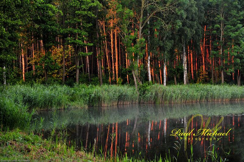 Three birch in the morning.