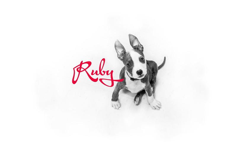 Pang - Ruby - 12.2016