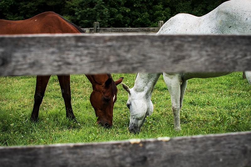 horses grazing_DSC3171.jpg