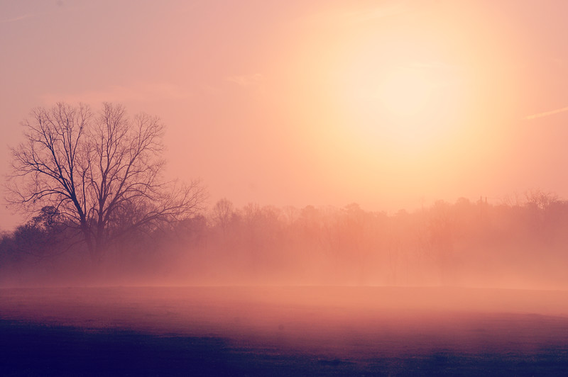 A beautiful day was begun with a foggy morn ...