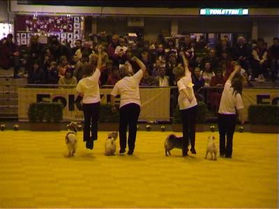 Dogdance-wedstrijd Leiden Ghostbusters 20 maart 2004
