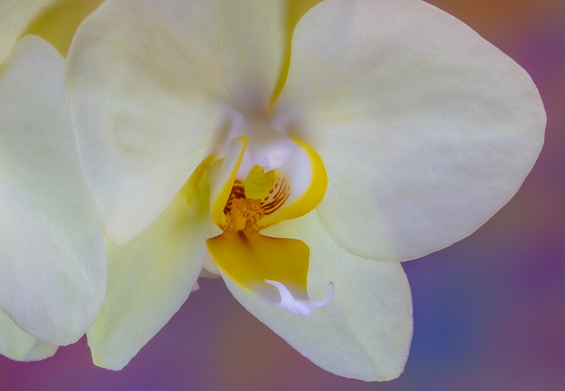 orchid (1 of 2).jpg