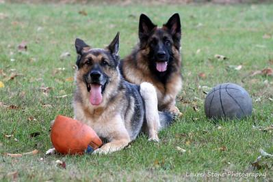 Dogs and Balls... Tori and Ari - Slideshow